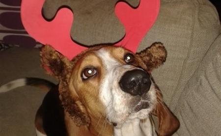 Rufus the reindeer